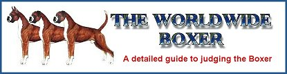 The Worldwide Boxer- a detailed guide to judging the Boxer