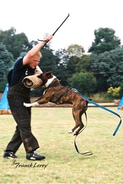 Schutzhund - attack work- Grand Ch and Ch KUSA Tanyati Greystoke AD BH BT